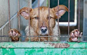 You Help the Kill, When Buying From Puppy Mills